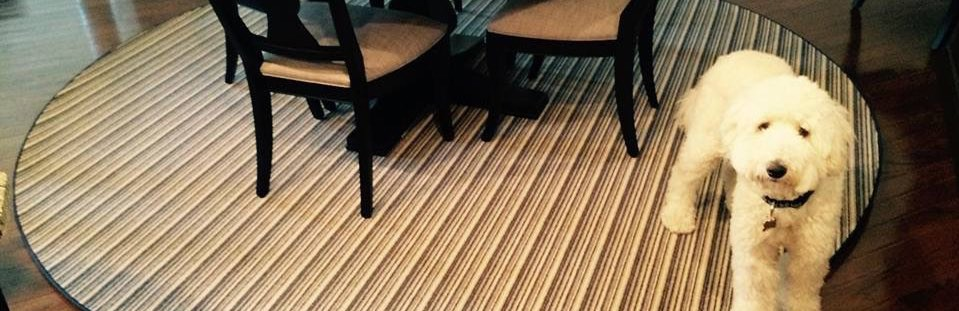 NJ pet stain and order removal from rugs